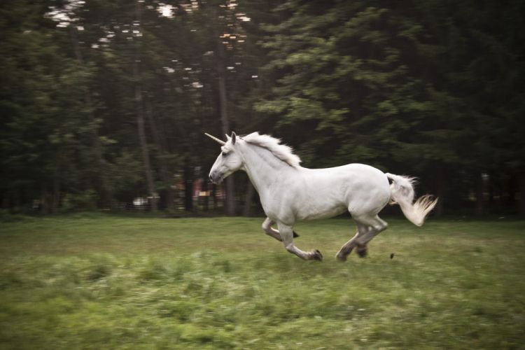 unicorn horse magical animal r wallpaper