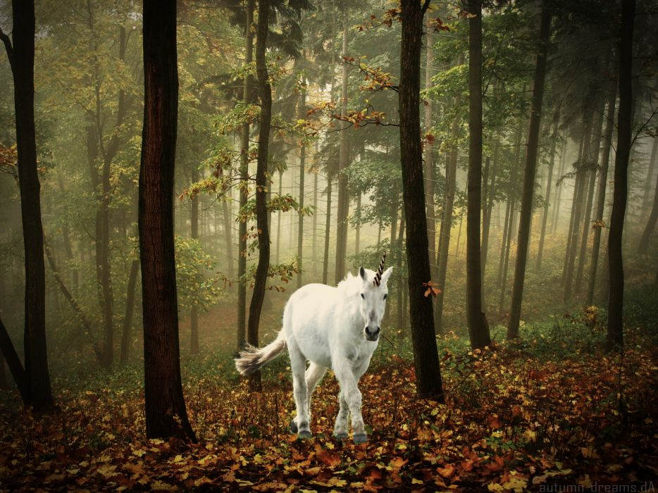 unicorn horse magical animal autumn forest   t wallpaper