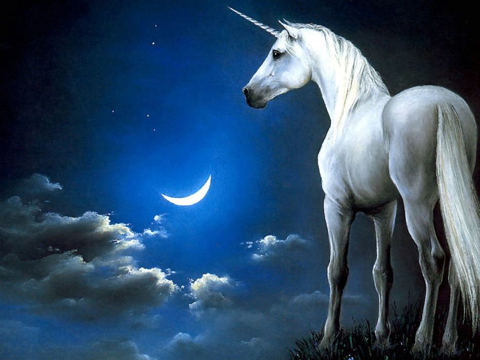 unicorn horse magical animal moon    h wallpaper