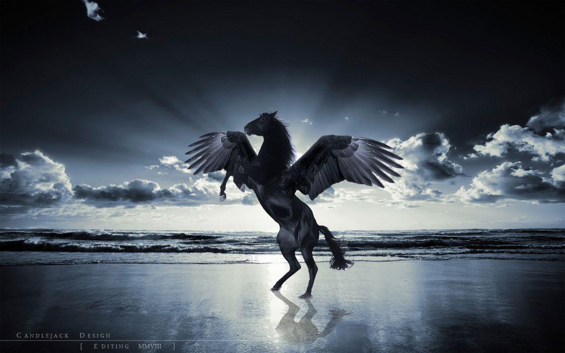 unicorn horse magical animal pegasus ocean beach     f wallpaper