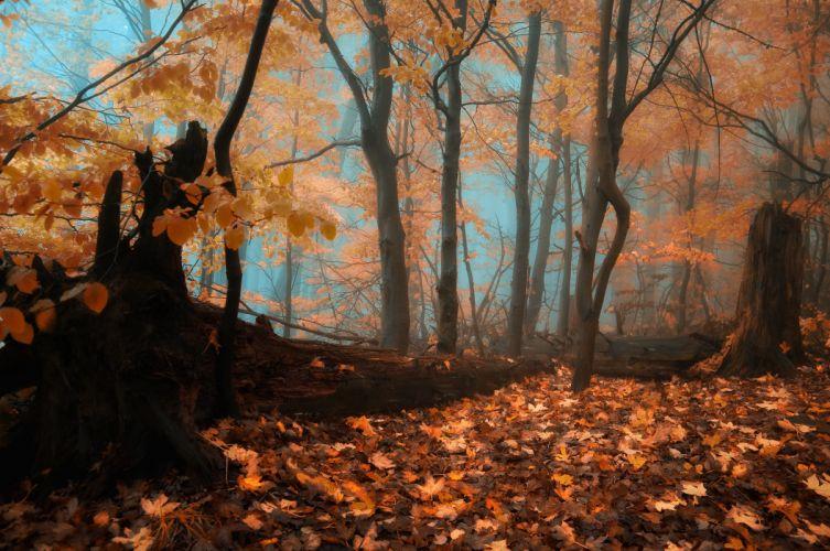 autumn forest trees fog landscape wallpaper