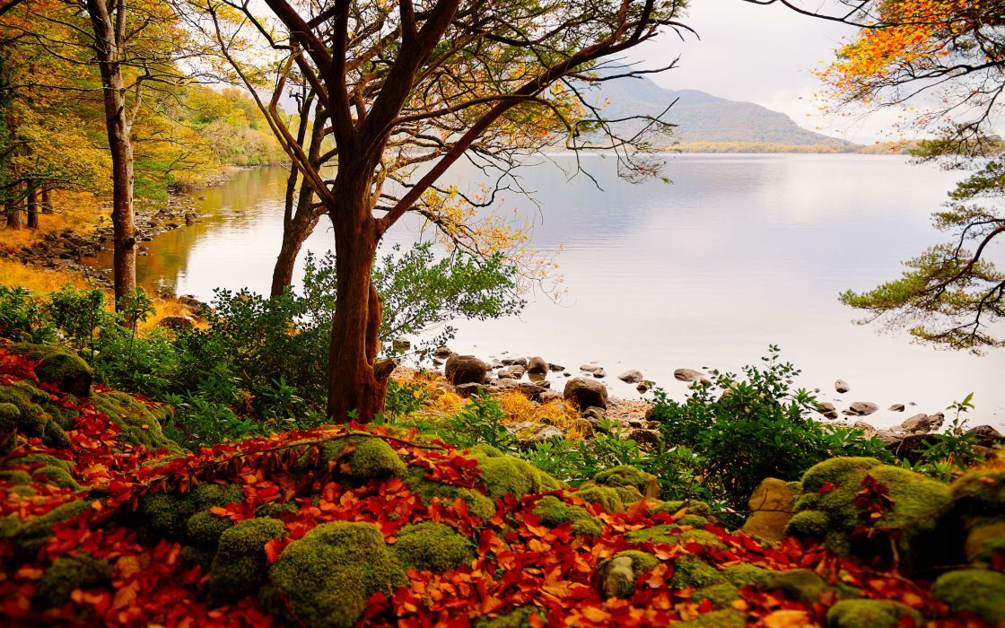 autumn lake trees landscape wallpaper