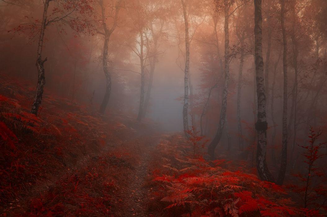 autumn road trees fog landscape wallpaper
