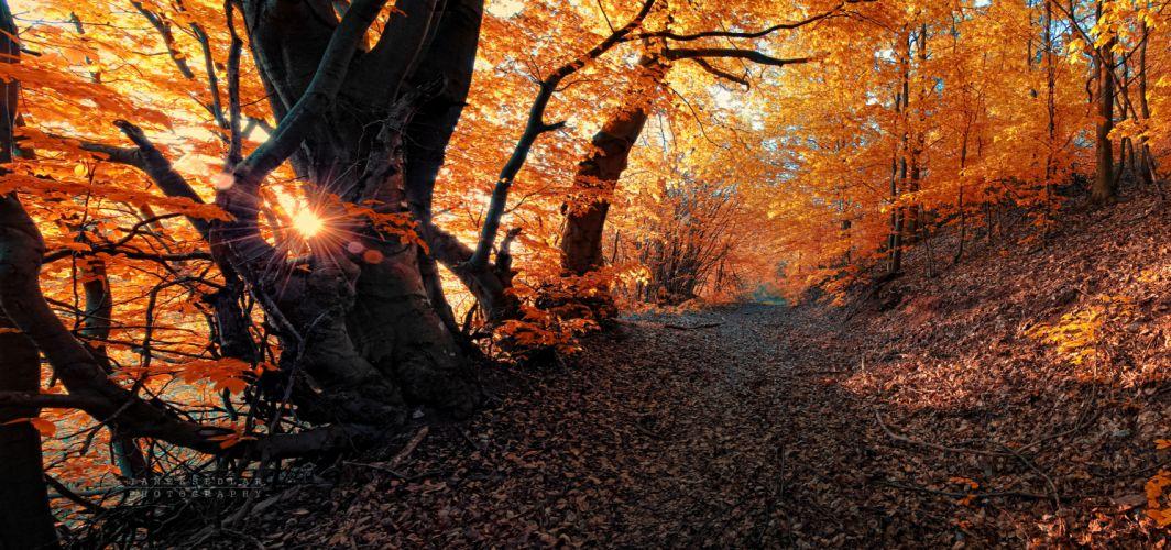 autumn road trees landscape f wallpaper