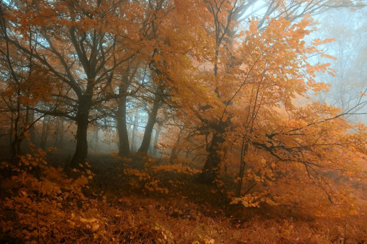 autumn trees fog landscape wallpaper