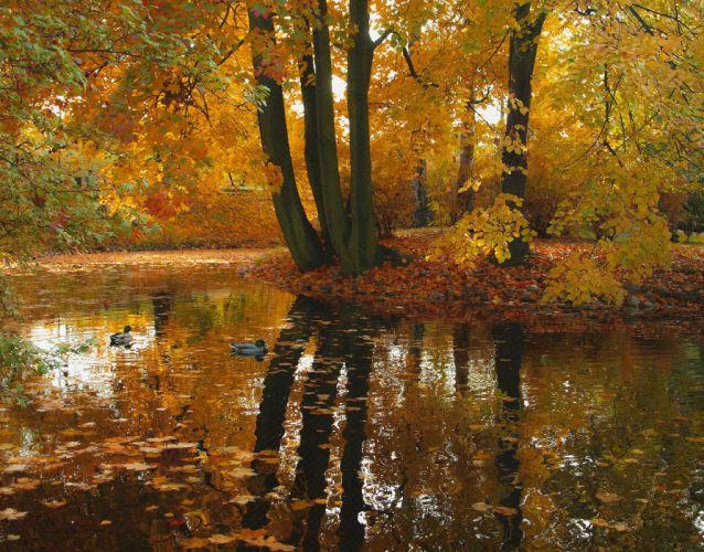 autumn trees pond ducks nature f wallpaper