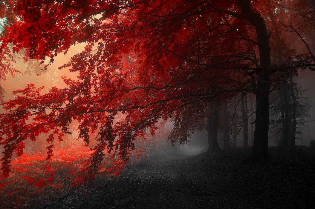 autumn trees road fog landscape wallpaper
