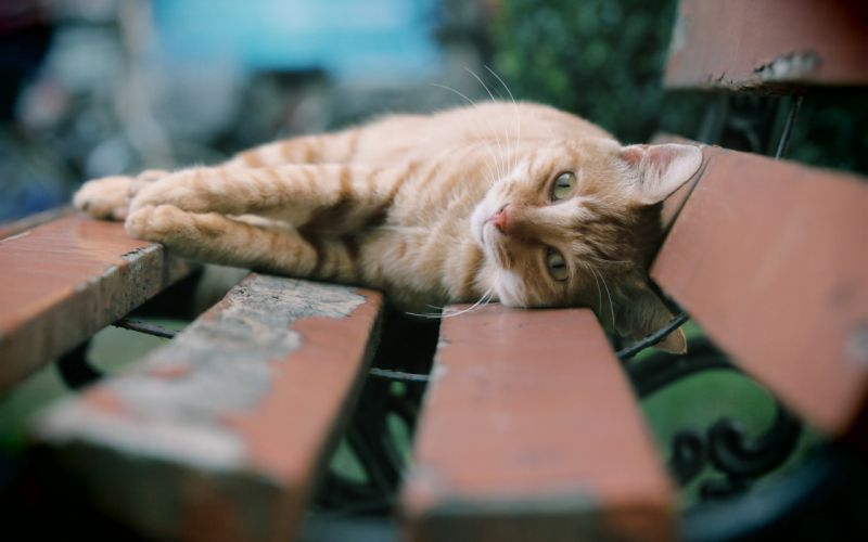 Cats Bench Boards Animals wallpaper