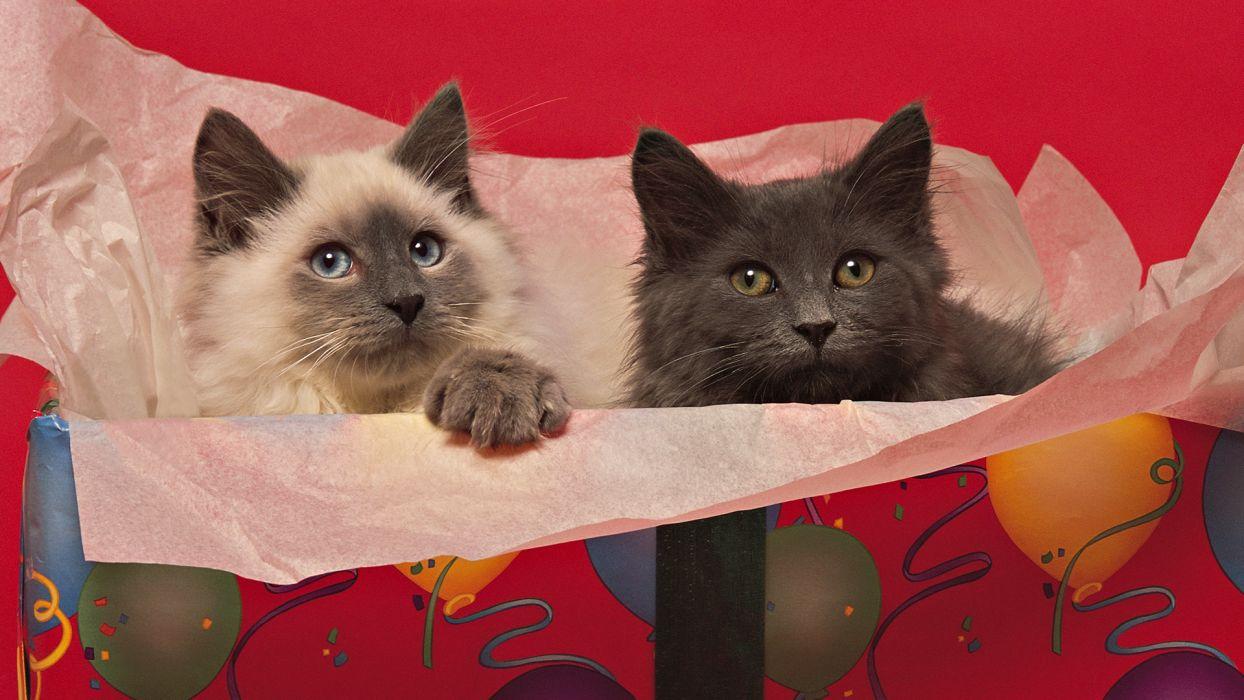 Cats Two Animals birthday     r wallpaper