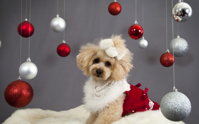 christmas new year holiday dog g wallpaper