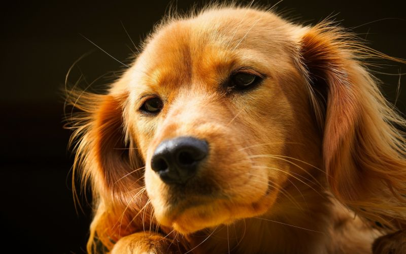 dog friend wallpaper
