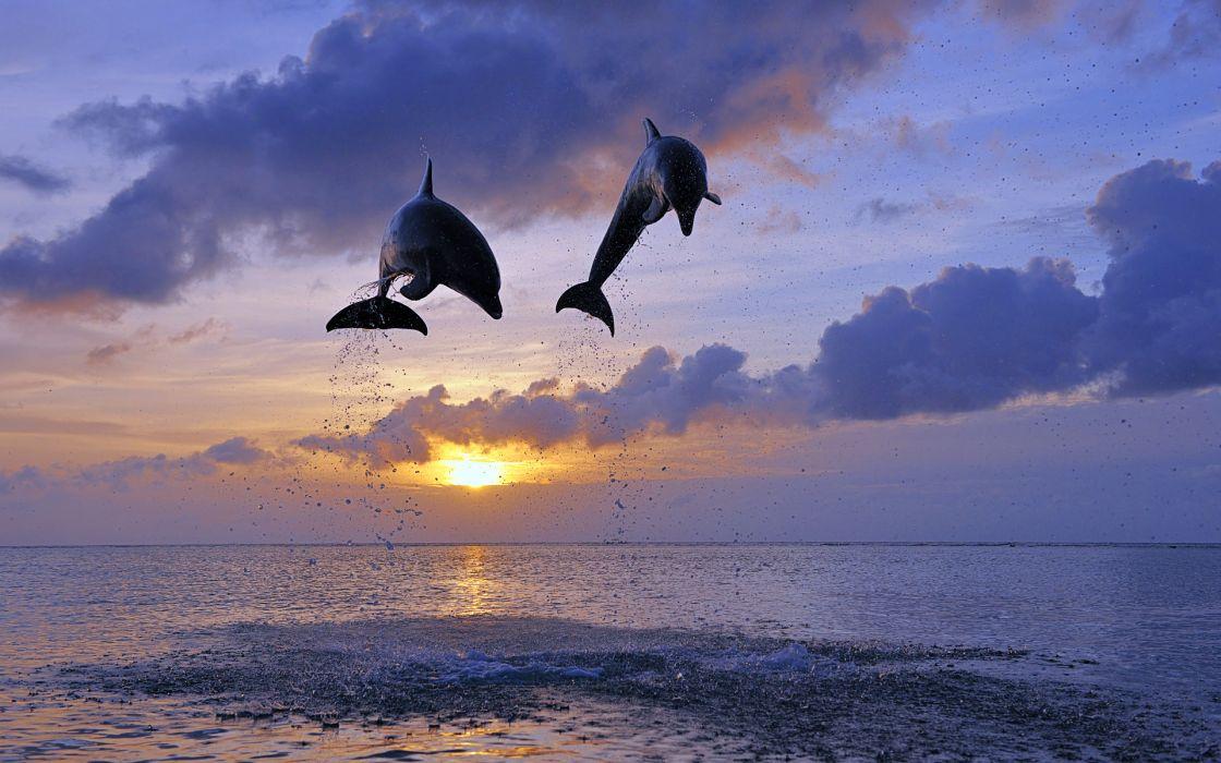 Dolphin Jump Sunset Clouds Ocean wallpaper