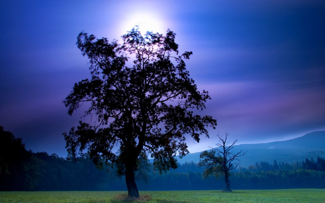 field night trees landscape wallpaper