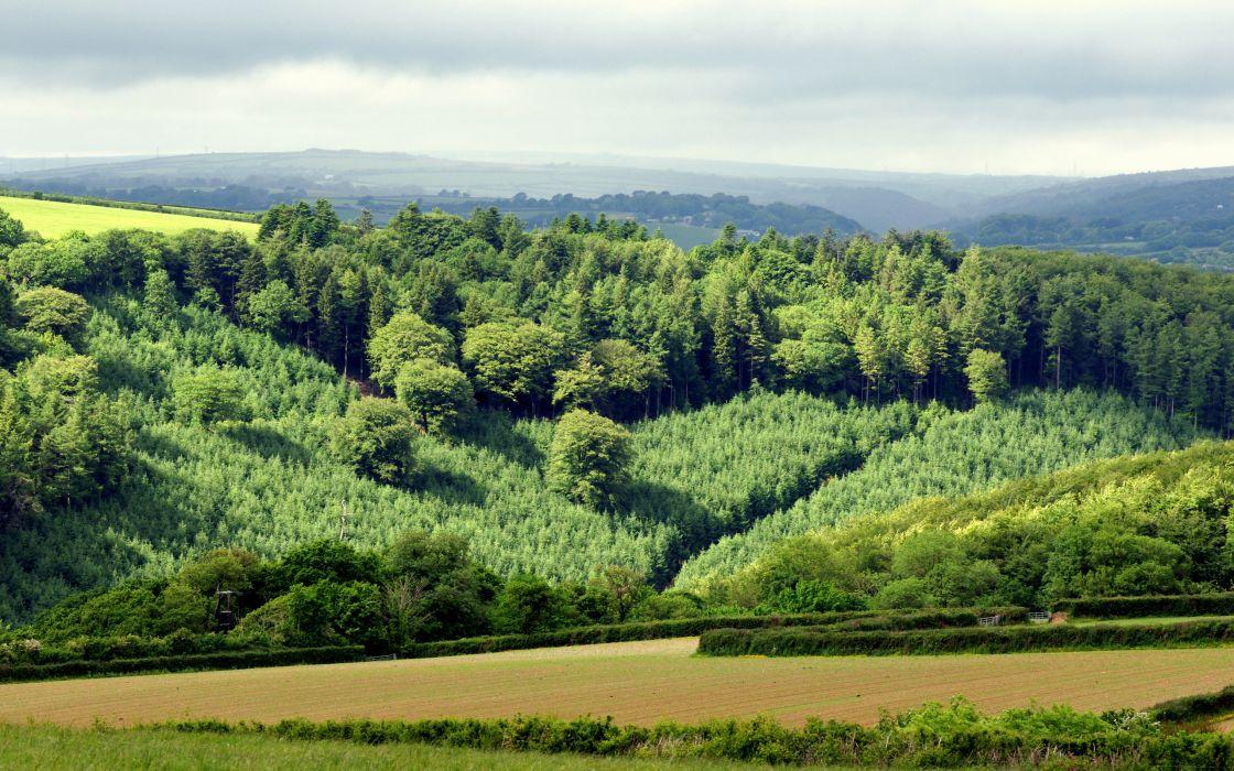 Field Hills Forest Trees Landscape Wallpaper