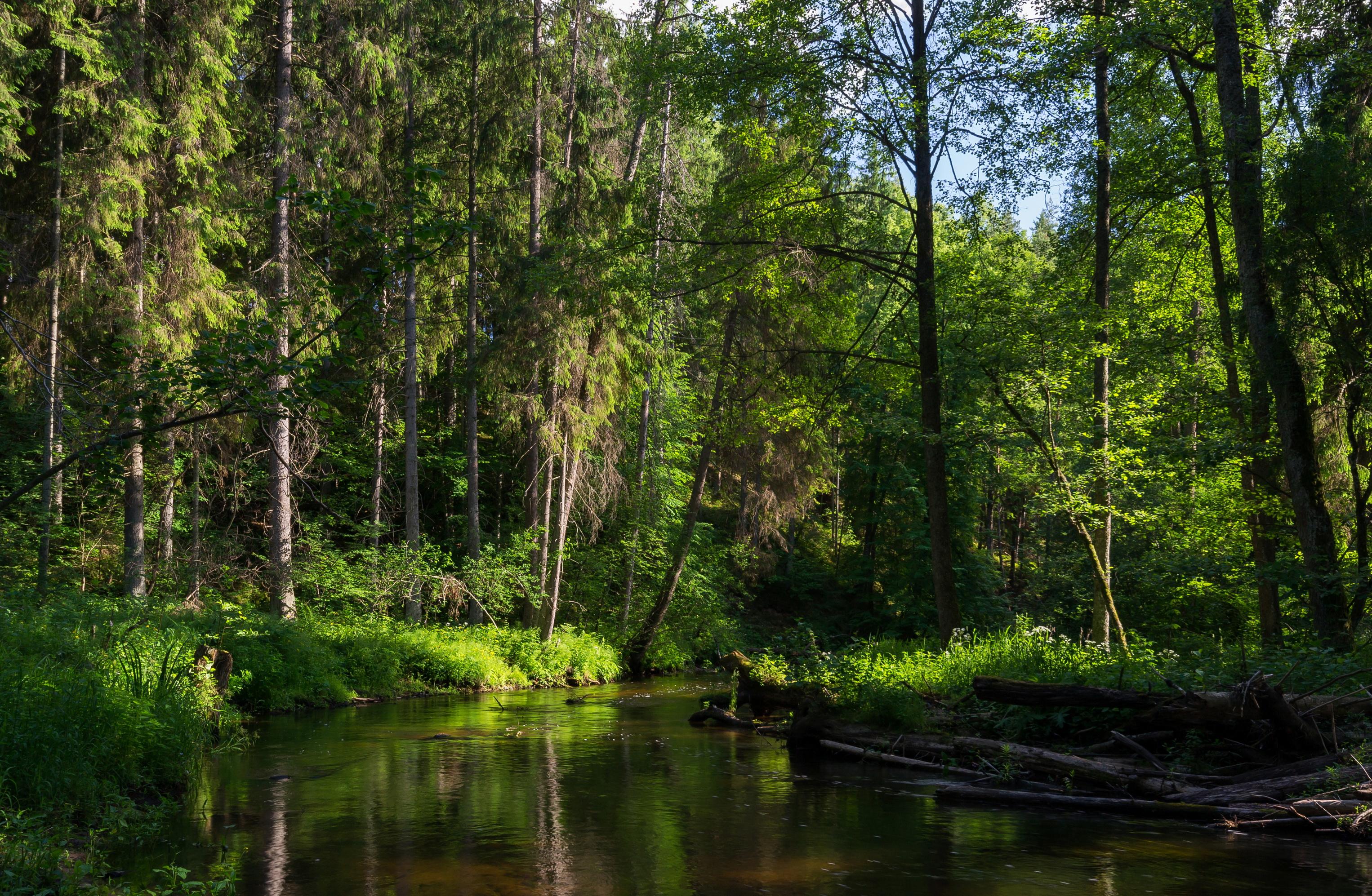 Фото природа леса