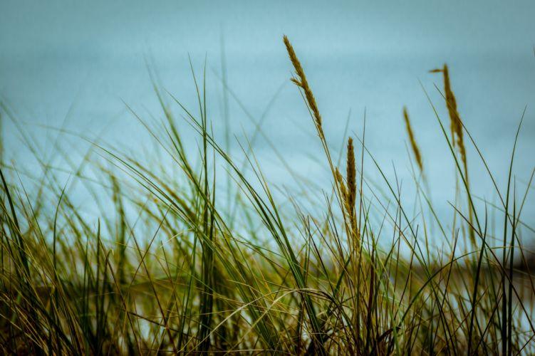 grass sky close-up wallpaper