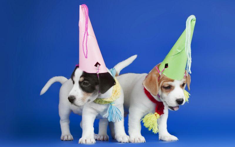 hats dogs puppie puppy birthday wallpaper