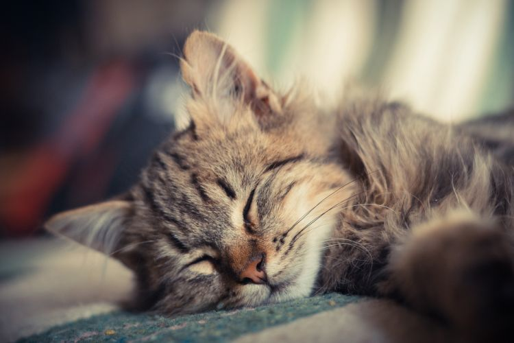 kitten sleeping cat small wallpaper