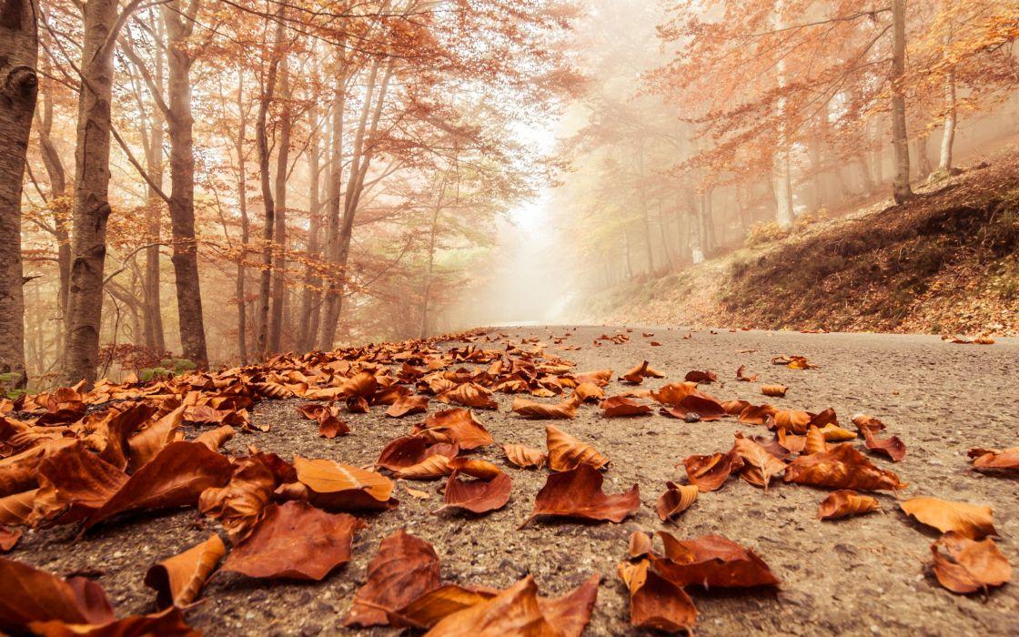 Misty foggy road autumn beech landscape macro deciduous leaves nature trees forest wallpaper
