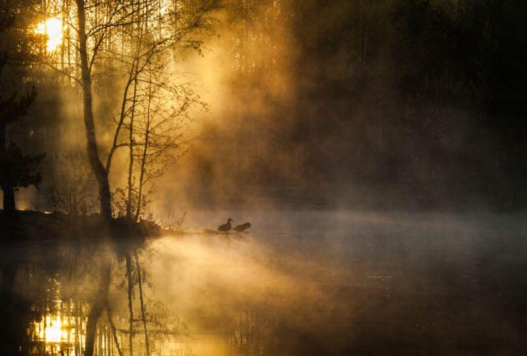 morning mist birds forest river sunrise trees autumn wallpaper