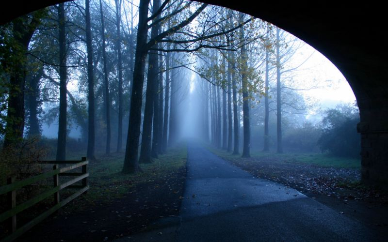 morning road fog trees landscape wallpaper