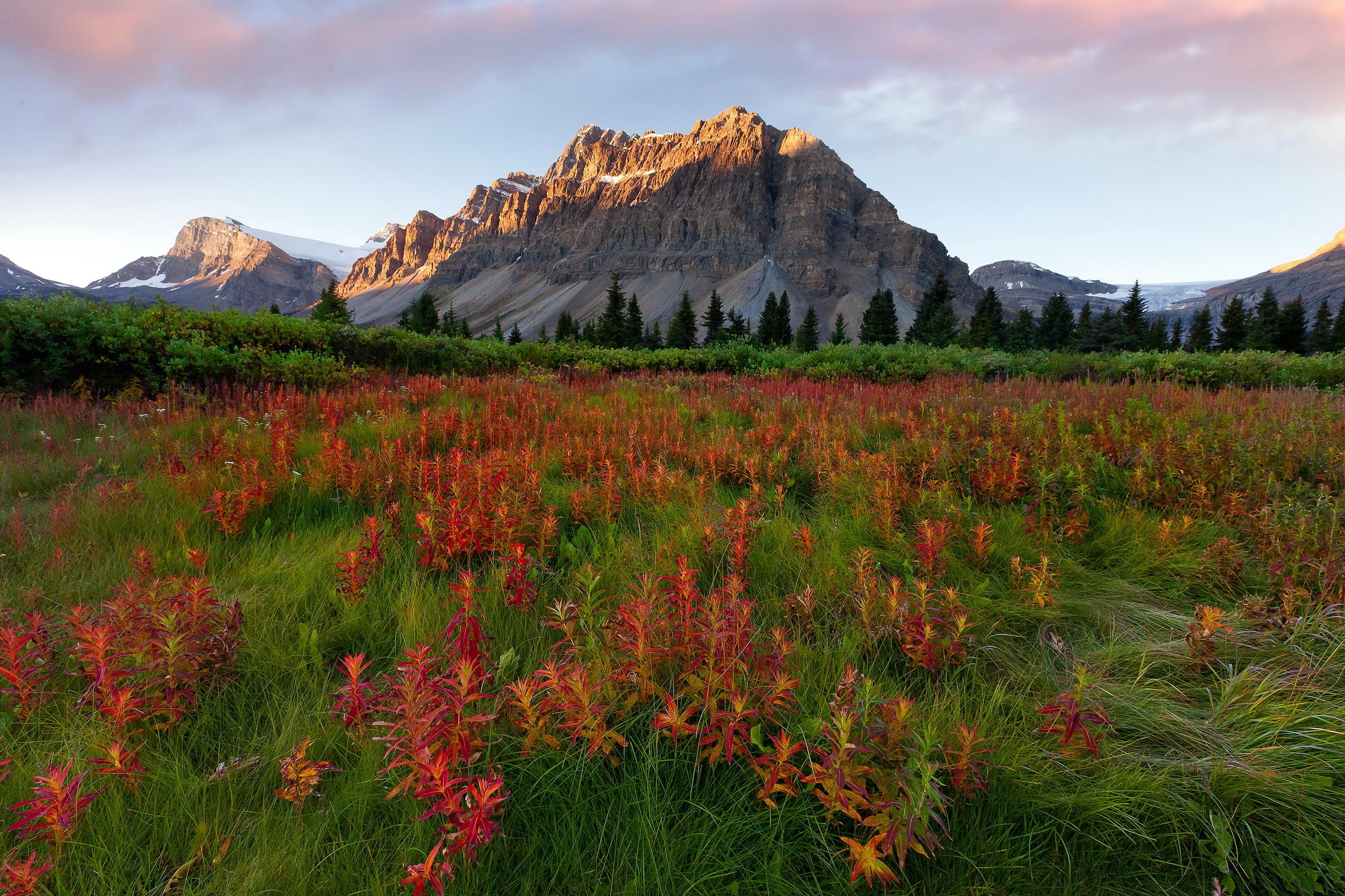 mountains scenery glacier montana grass nature wallpaper