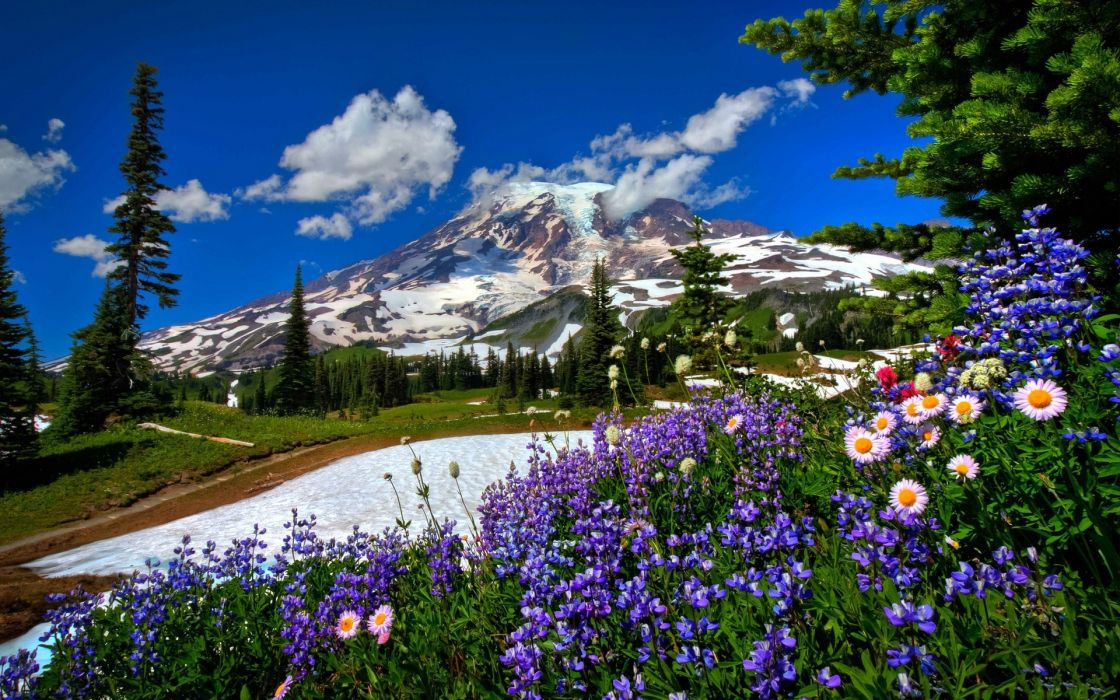 mountains snow flowers wallpaper