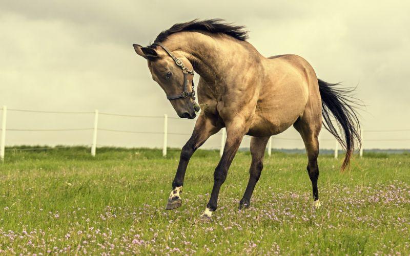 nature field horse wallpaper