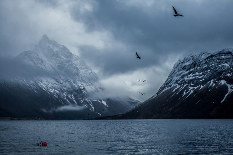 Norway bay Bakin mountains birds wallpaper