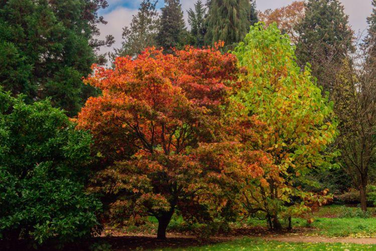 Parks England Batsford Trees Nature autumn wallpaper