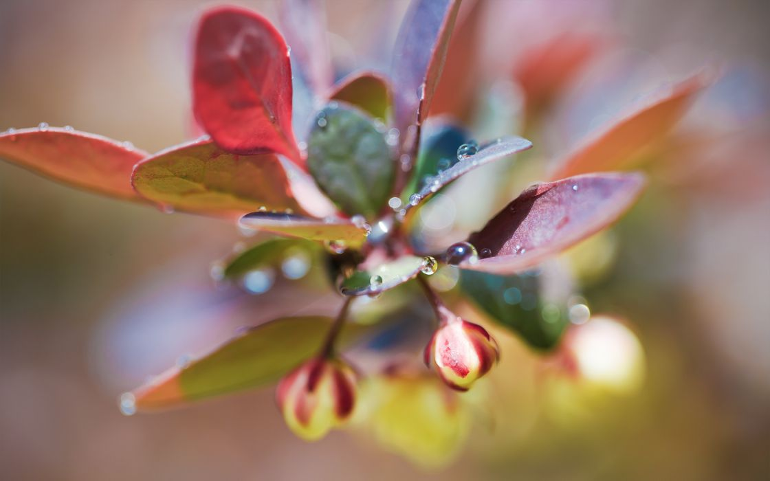 plant drops photo light leaves buds close-up wallpaper