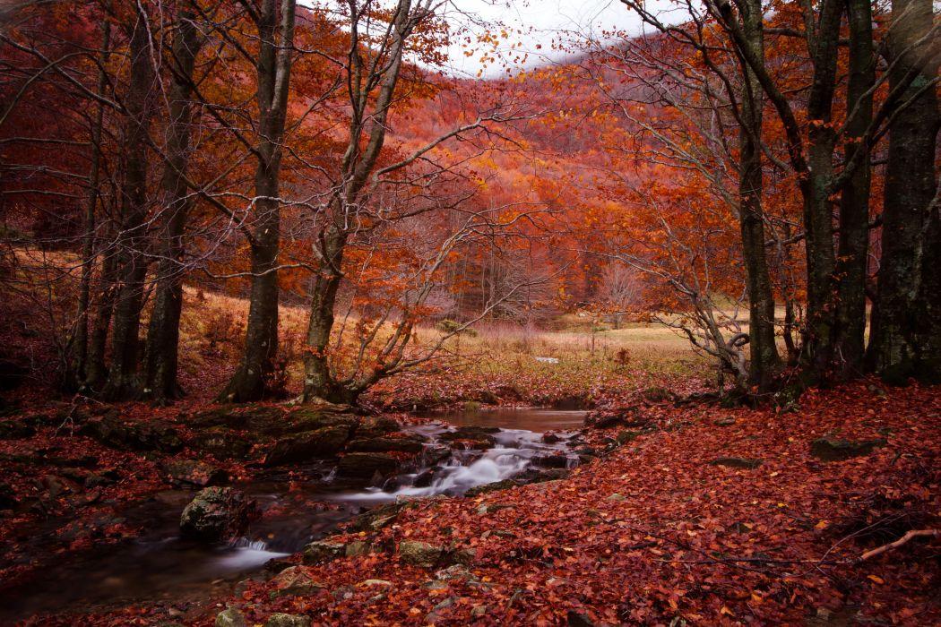 Seasons Autumn Stream Nature wallpaper