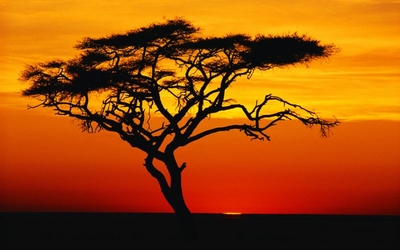 sunset silhouette wallpaper