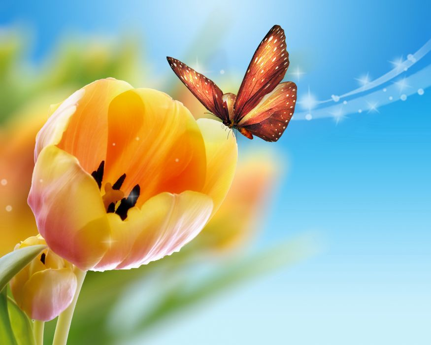 Tulips Butterflies Flowers bokeh wallpaper