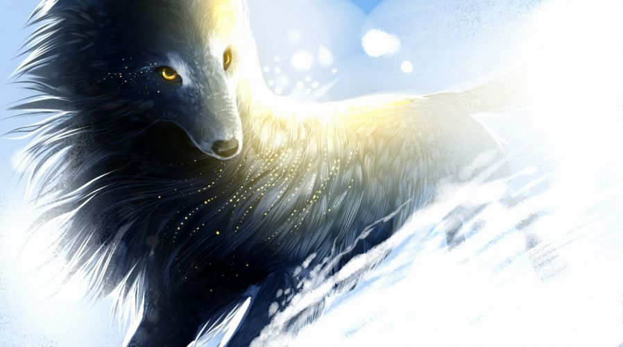 art wolf snow wind sparks magical f wallpaper