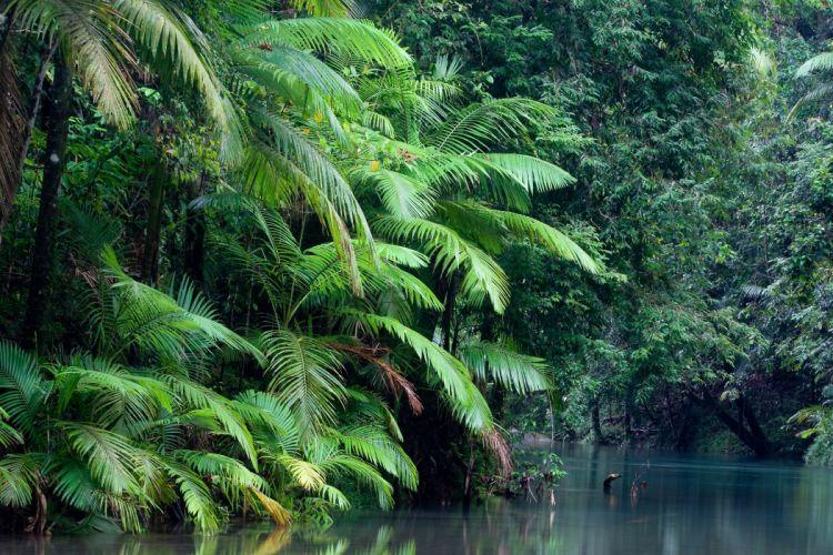 Australia forest river nature wallpaper
