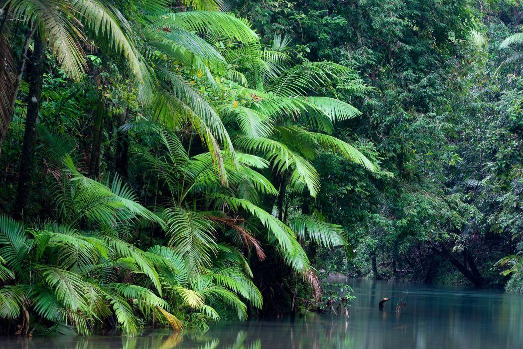 Australia Forest River Nature Wallpaper 3072x2048 176488