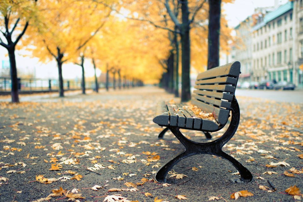 Autumn Avenue Bench Nature Cities wallpaper
