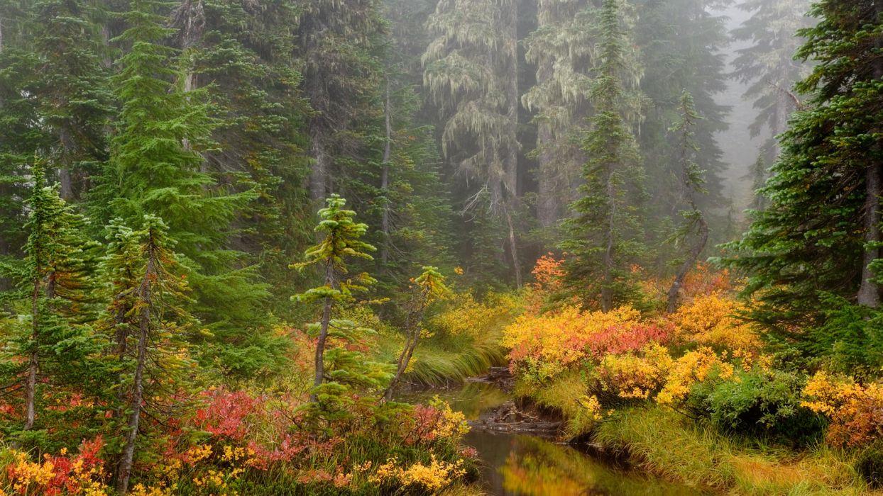 autumn forest river trees landscape wallpaper