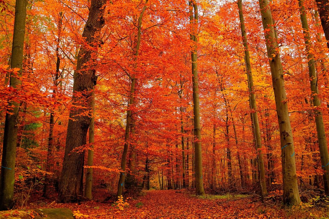 autumn forest trees landscape wallpaper