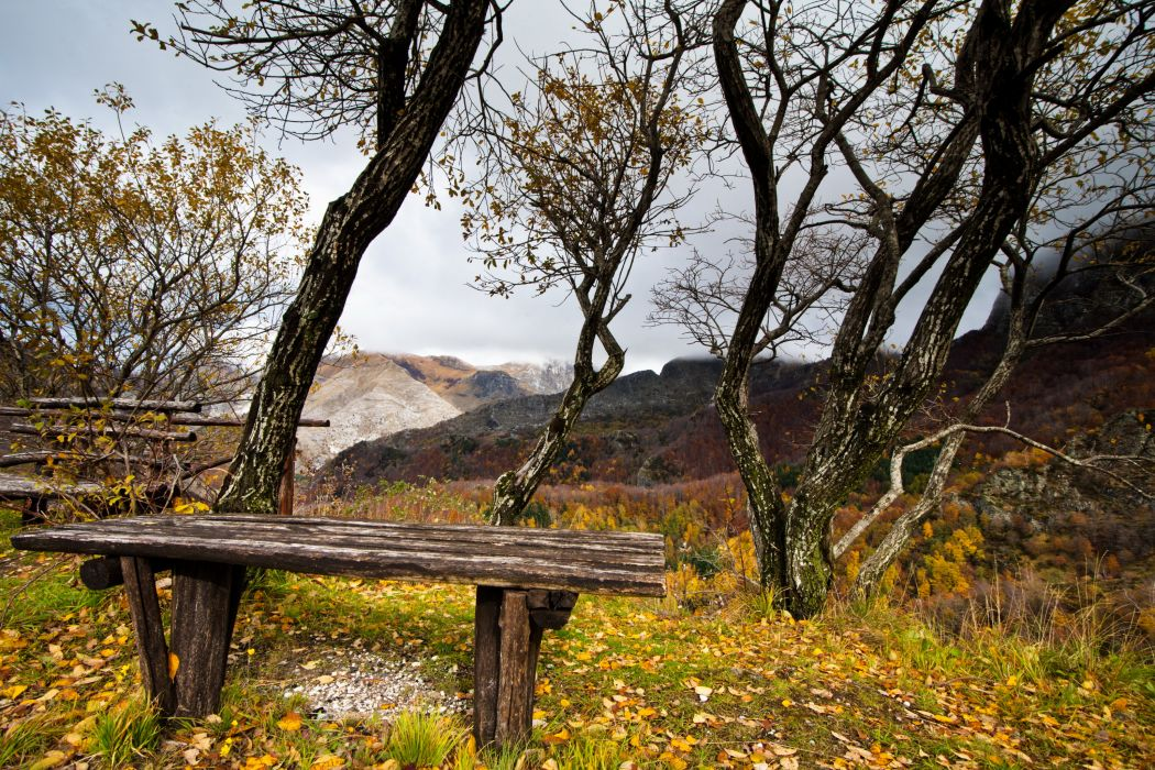 bench autumn trees leaves wallpaper