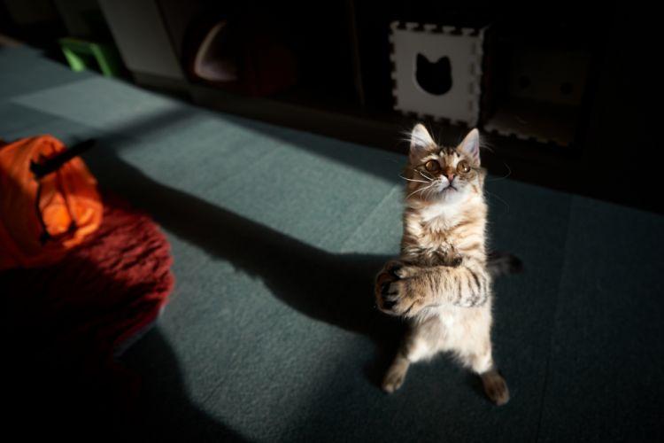 cat standing game wallpaper