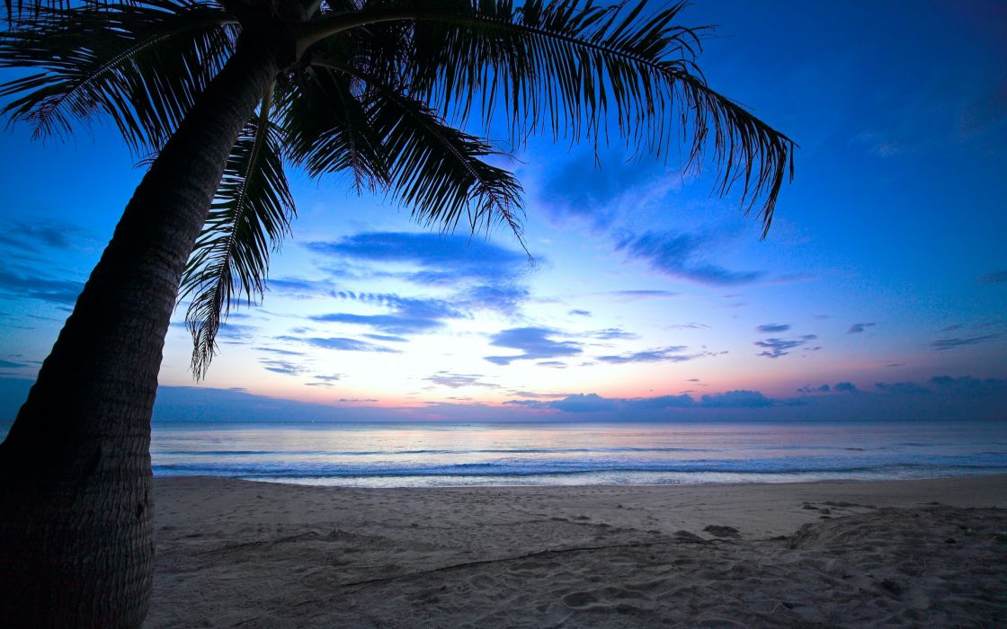 cloudy sky weeping palm tree tropical sunset caribbean ocean wallpaper