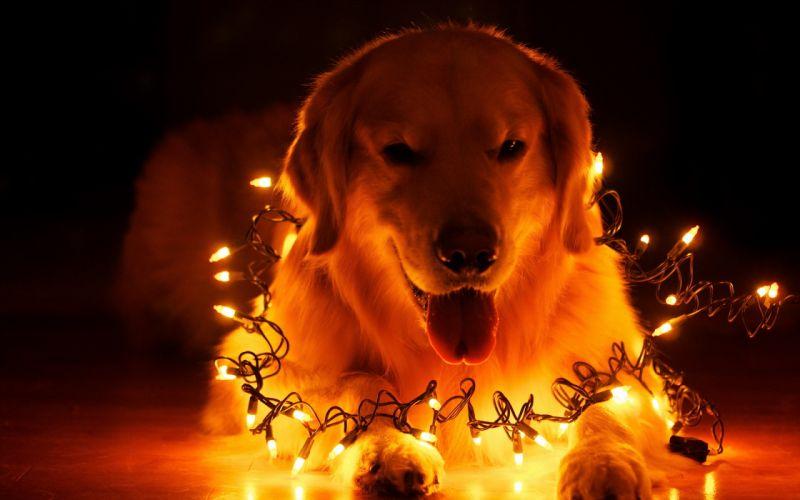 dog holiday home christmas bokeh wallpaper