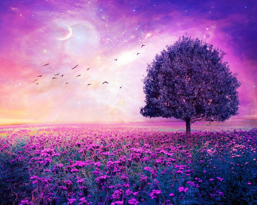 field tree 3d art stars bokeh sky flowers f wallpaper