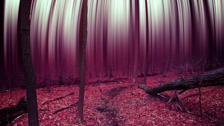 forest abstract trees leaves autumn surreal psychedelic f wallpaper