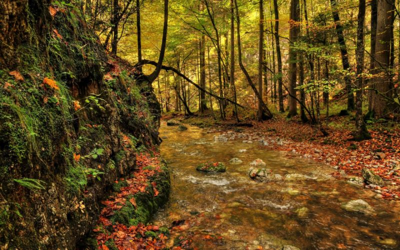forest river fall landscape wallpaper