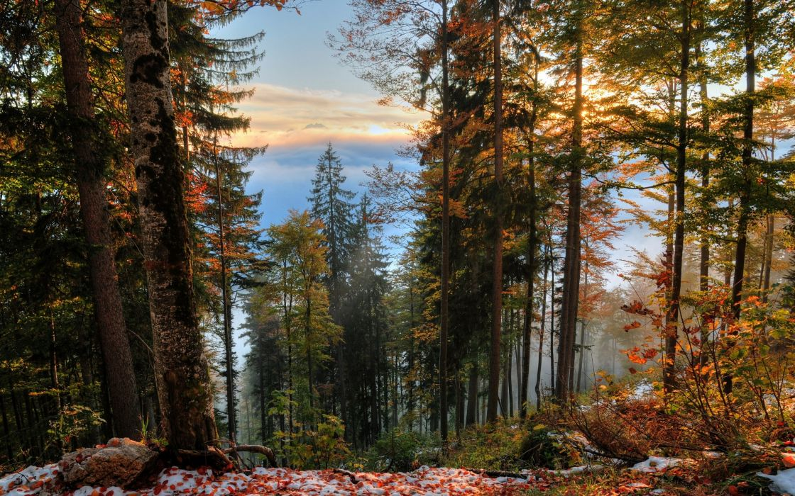 forest trees fall landscape autumn wallpaper