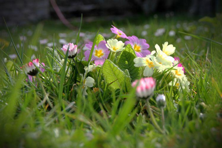 grass field spring flowers bokeh wallpaper