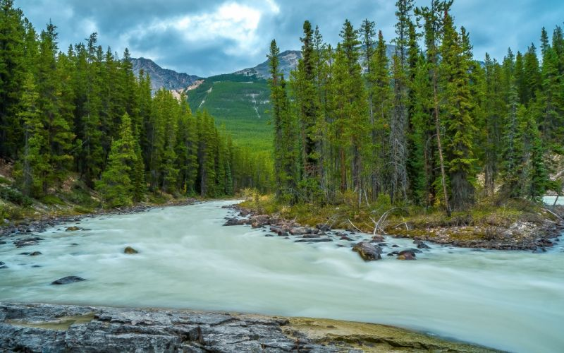mountain forest river trees landscape wallpaper